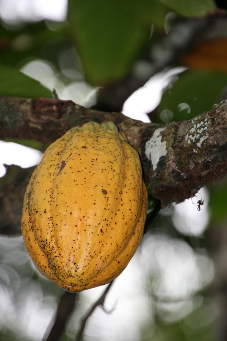 Kakao hat einen positiven Effekt auf die Endothelfunktion