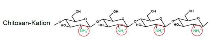 Die Struktur Polykation Chitosan im Chitosan-Gel